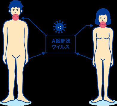 A型肝炎の解説 症状や感染経路・検査や治療について│STD研究所